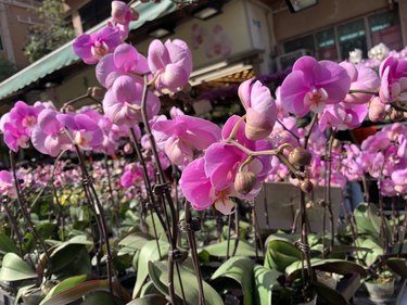 the flower market for lunar new year