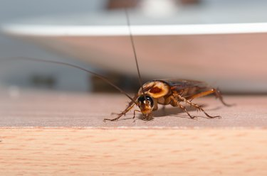 Professional vs. DIY Pest Control: Which Is Right for You?