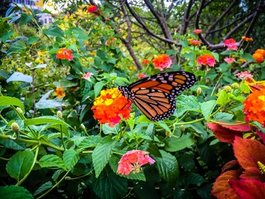 The Complete Guide to Butterfly Gardens