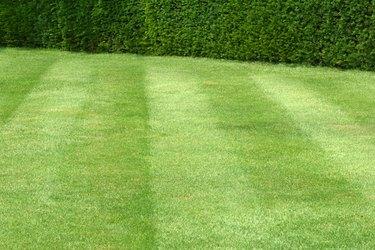 A faultless lawn