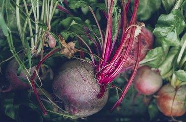 freshly harvested beetroot