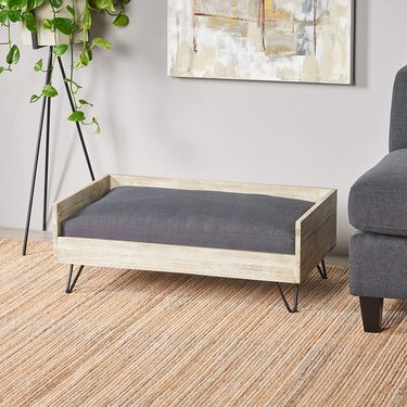 Hip cat bed in minimalist room