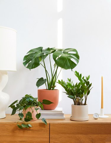 the sill online plants