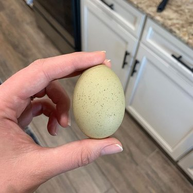 green egg in person's hand