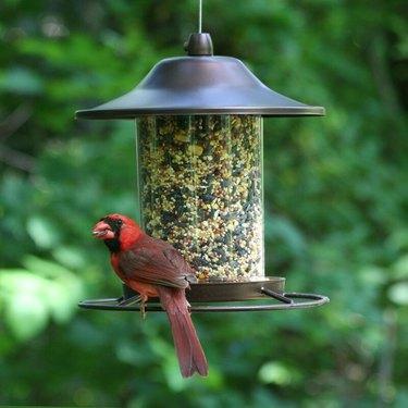 Alsibiaoes Ebern Designs Tube Bird Feeder