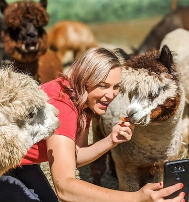 woman feeding therapy llamas