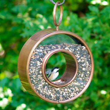 Red Barrel Studio Barlitt Circle Fly-Thru Decorative Bird Feeder