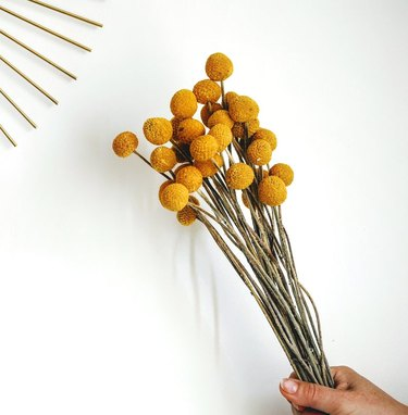 person holding dried flowers