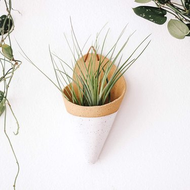 white cone ceramic wall planter with air plant