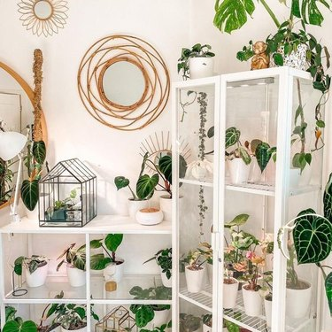 IKEA greenhouse cabinet filled with plants