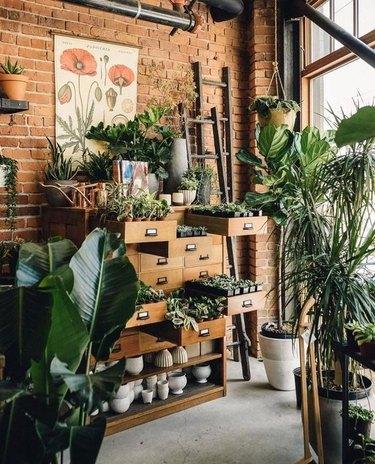 old cabinet repurposed for indoor garden