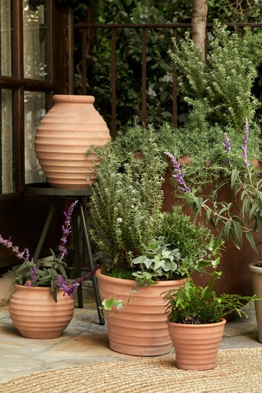 plants in terra cotta planters in an outdoor space