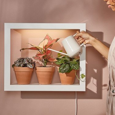 person watering plants near blush wall with white watering can