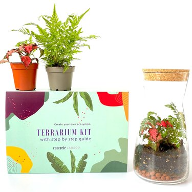ConcreteLabCo Terrarium Kit With Cork Lid,