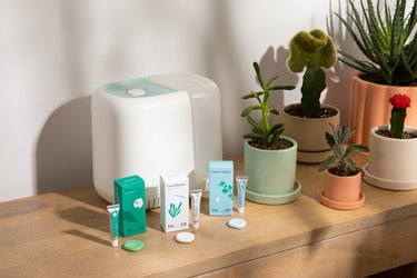 canopy x the sill humidifier and aroma kit with plants
