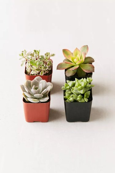 four small succulents