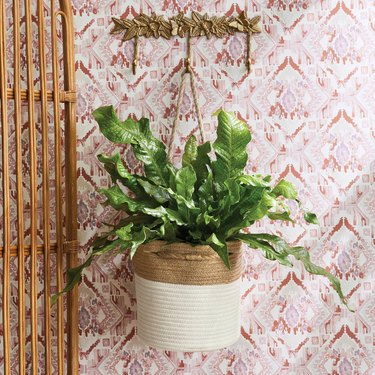 hanging basket with plant