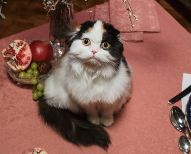 white and black cat on pink tablecloth