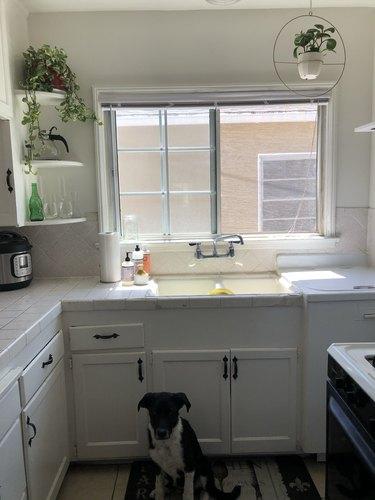 White kitchen with dog