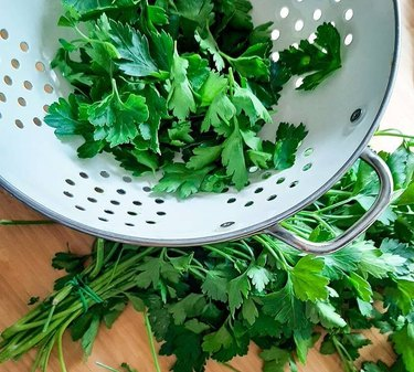 cilantro in white colander