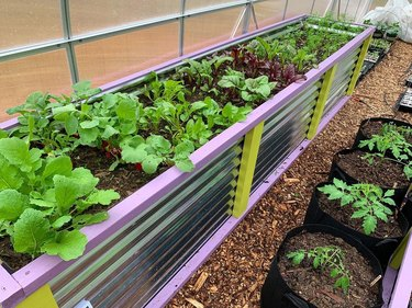 raised garden bed with plants