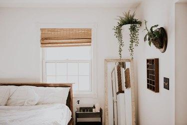 Staghorn fern on bedroom wall