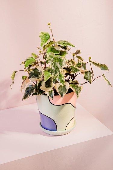pastel flower pot with plant