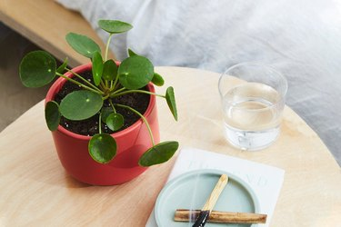 pilea plant in red pot on table
