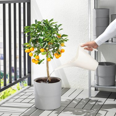 PS 2002 Watering Can