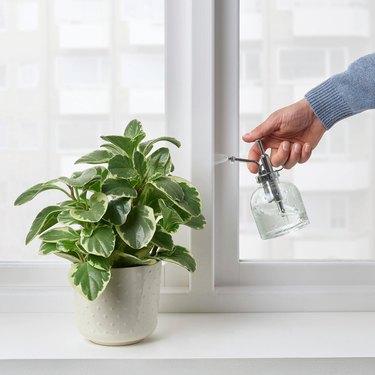 Sesamfrön Plant Mister