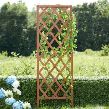 trellis with greenery in outdoor space near blue and white flowers