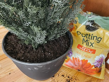 Fill the rest of the pot up with potting mix.