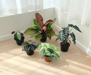 outside in plants on floor in sunlight
