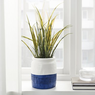 blue and white vase with green plant