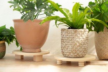 DIY Wood Plants Risers