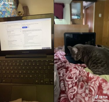two screenshots of a laptop and a cat near a mini laptop