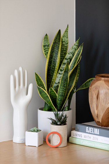 Snake plant on wood table with books
