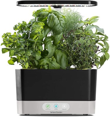 indoor garden planter with herbs