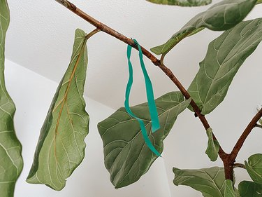 Loop the cut floral tape over the branch and tie a knot in the end.