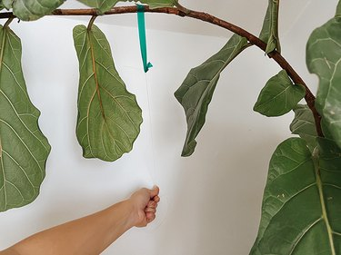 Pull the fishing line tight against the wall so that the branch is pulled forward.