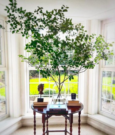 Tree branches in vase on desk by windows