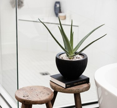 Aloe Vera plant in black container on wood stool