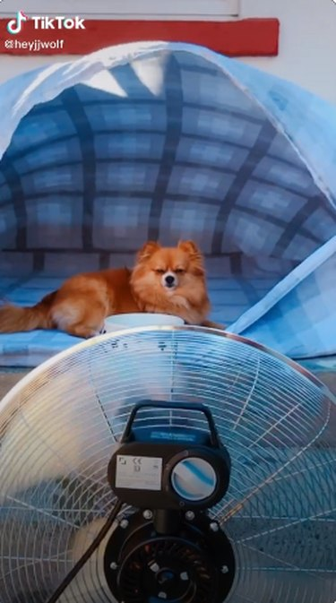 dog in blanket fort with fan