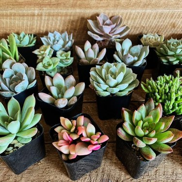 a group of succulents in various colors