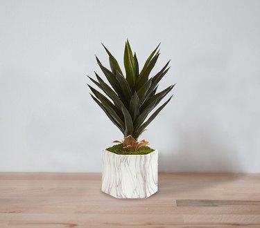 fake agave plant