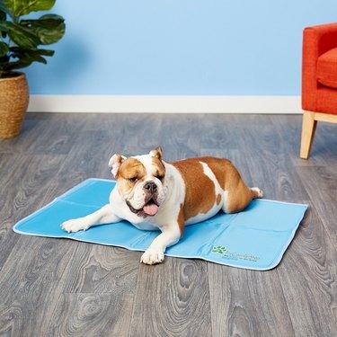 ways to keep pet cool dog cooling pad