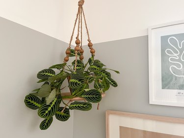 Hanging plant on rope and wood charger