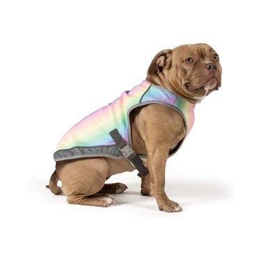 pet cooling vest