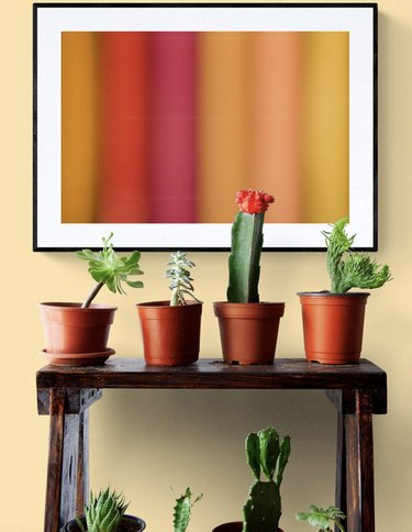 Cacti with vibrant wall art
