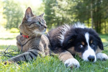 cat and dog in grass